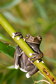 FRG 01 WF0009 01