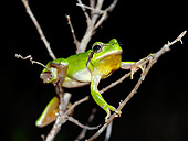 FRG 01 WF0015 01