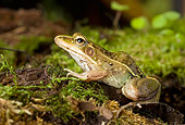 FRG 01 WF0018 01