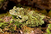 FRG 01 WF0019 01