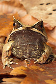 FRG 01 WF0020 01