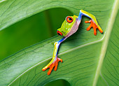 FRG 01 KH0001 01
