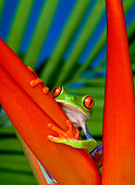 FRG 01 KH0003 01