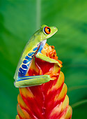 FRG 01 KH0008 01