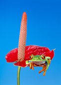 FRG 01 KH0009 01