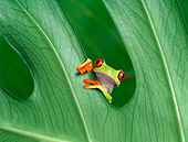 FRG 01 KH0010 01