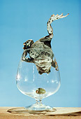 FRG 01 RC0001 01