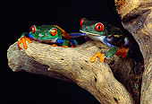 FRG 01 RK0005 02