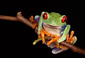 FRG 01 RK0019 18