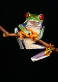 FRG 01 RK0019 41