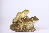 FRG 01 RK0025 01