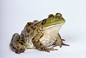 FRG 01 RK0026 02