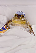 FRG 01 RK0028 02