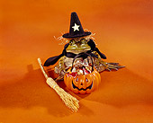FRG 01 RK0031 01