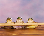 FRG 01 RK0046 03