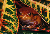 FRG 01 RK0061 10