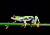FRG 01 TK0001 01