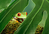 FRG 01 TK0004 01