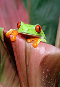 FRG 01 TK0005 01