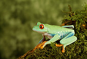 FRG 01 TK0009 01