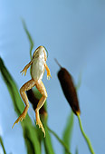 FRG 01 TK0019 01