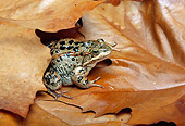 FRG 01 TK0020 01