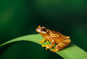 FRG 01 TK0026 01