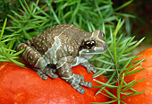 FRG 01 TK0029 01
