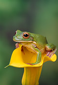 FRG 01 TK0031 01