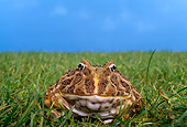 FRG 01 TK0042 01