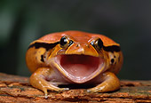FRG 01 TK0043 01