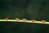 FRG 01 TK0045 01