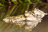 FRG 02 MC0001 01