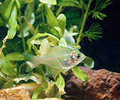 FSH 01 GL0001 01