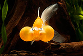 FSH 01 JE0004 01