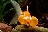 FSH 01 JE0007 01