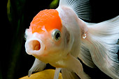 FSH 01 JE0008 01
