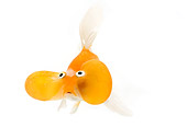 FSH 01 JE0010 01
