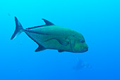 FSH 01 JM0046 01