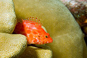 FSH 01 JM0053 01