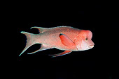 FSH 01 JM0065 01
