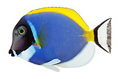 FSH 01 MH0009 01