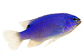 FSH 01 MH0013 01