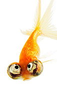 FSH 01 MH0015 01