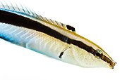FSH 01 MH0023 01