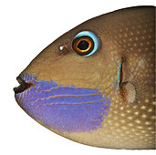 FSH 01 MH0032 01