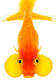 FSH 01 MH0035 01