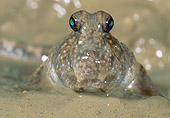FSH 01 MH0038 01