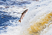 FSH 01 TK0002 01
