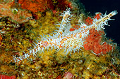 FSH 01 WF0017 01